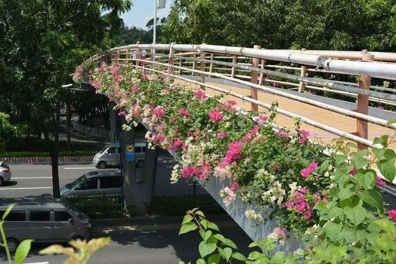 天橋綠化,橋梁綠化,道路綠化,高架橋綠化