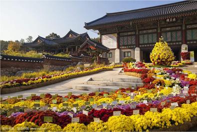 聚美藝術景觀設計-植物花壇景觀案例